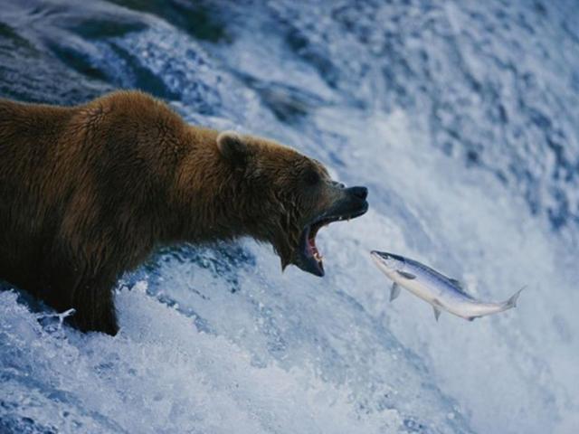Balık ağzıma düş