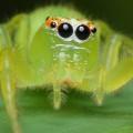 20 Milyon Yıllık Örümcek Fosili Bize Ne Anlatıyor?