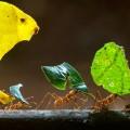 Karıncaların Akıl Dolu Besin Arama Teknikleri