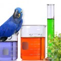 Kimya Uzmanı Canlılar