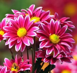 çiçek yerine