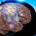 Beyinde Yeni Bir Tamir Sistemi Tespit Edildi